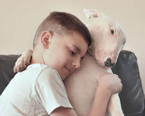 English Bull terriers are very calm dogs in that they are hard to provoke