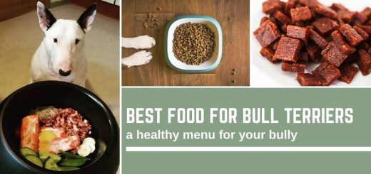 Best food for bull terriers: a menu for your bully
