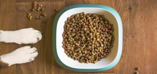 Best food for bull terriers