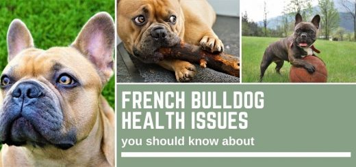 French Bulldog Health Issues you need to know about